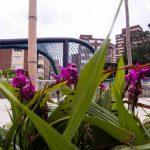 Parques del río: espacio para el deporte, familia y amigos